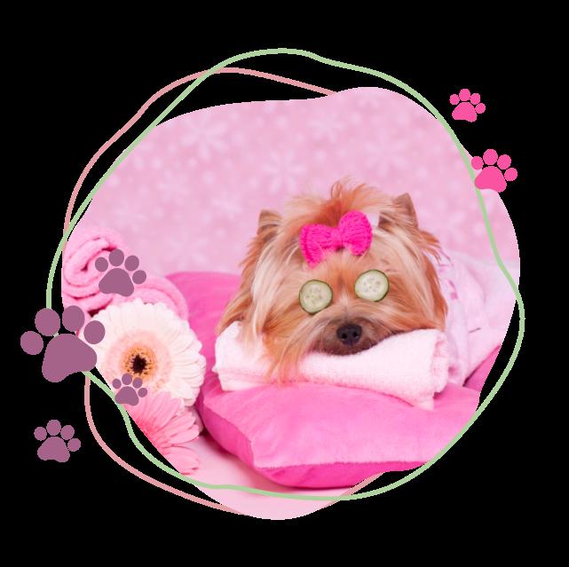 Dog Grooming Image