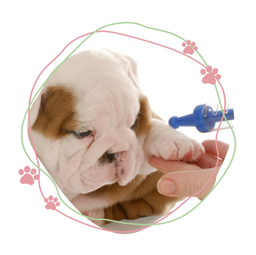 Image of puppy having a vaccination